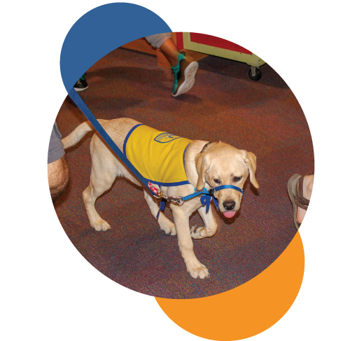 Accessibility-serviceanimal