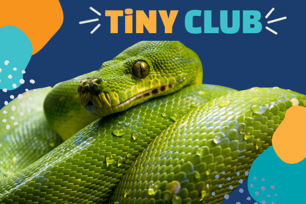 TiNY CLUB: Accordion Snakes | Children's Museum of Atlanta